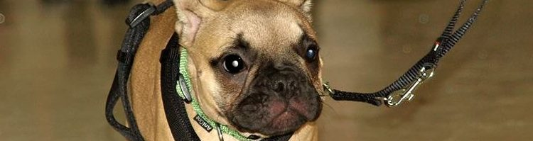 Kleinhundetraining ab 05.06.2019, 4 Einheiten