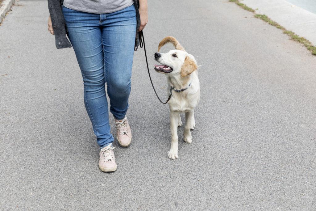 Intensives Leinentraining im Hundezentrum Wien