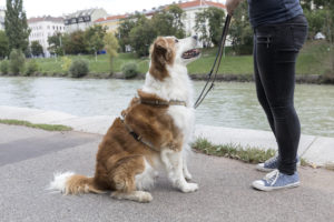 Trainingsinfo Hundezentrum Wien