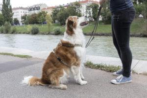 Trainingsinfo Hundezentrum Wien