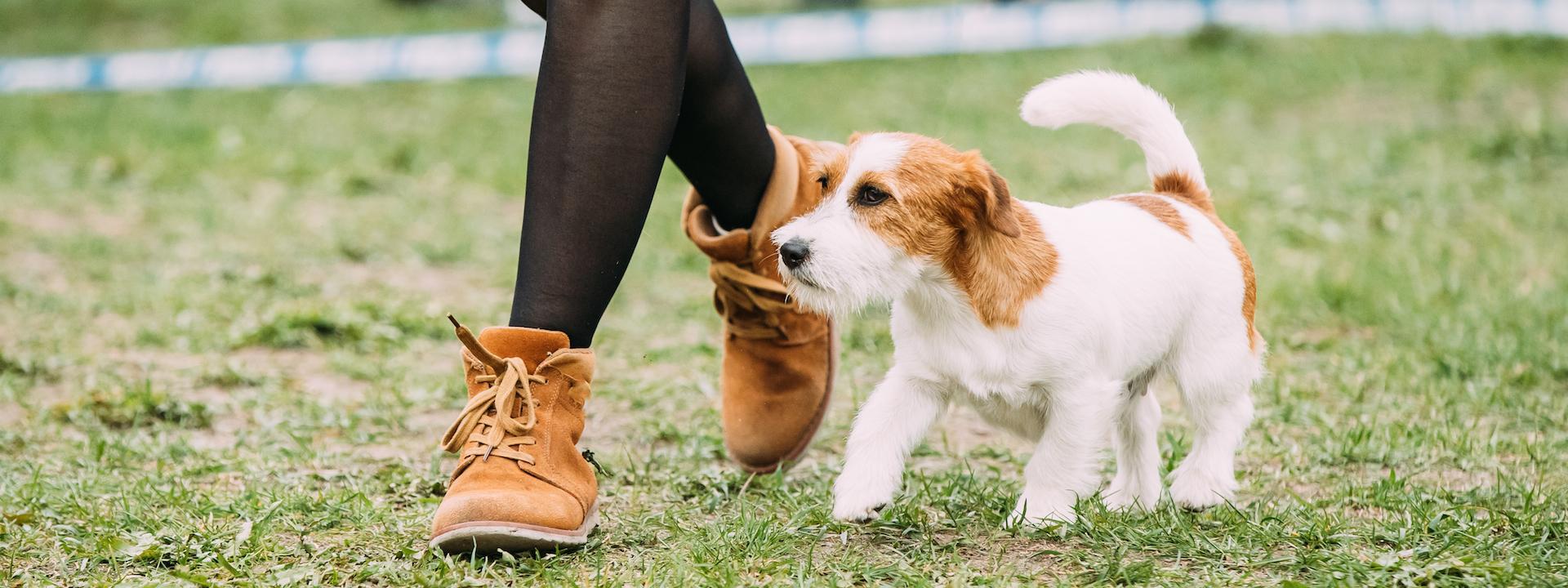 Alltagsfit 2 Grunderziehungskurs im Hundezentrum Wien