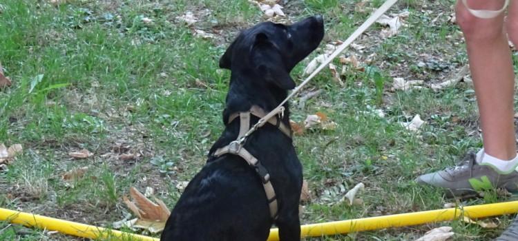 """Welpenkurs """"praktischer Teil"""" für kleine und große Hunderassen"""