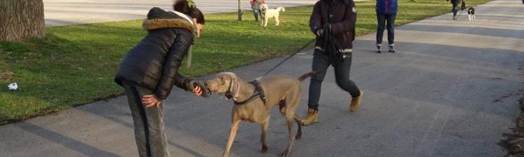 "Hundekurs ""immer der Nase nach…"" ab 16.03.2018"