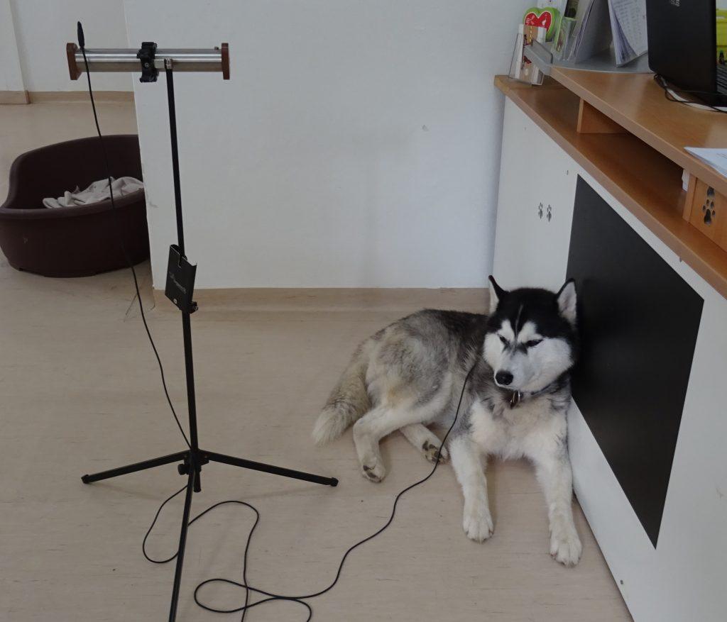 Bioresonanz Therapie für Hunde in der Hundeschule Hundezentrum Wien