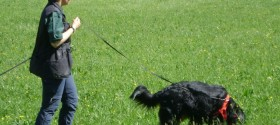 Hunde dating wien