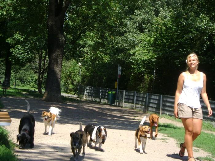 Social Walk im Hundezentrum Wien