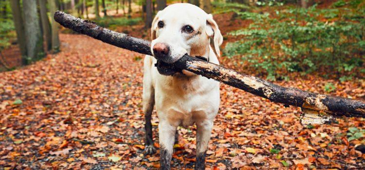 Hundewanderung: 10 Jahre Hundezentrum, 29.09.