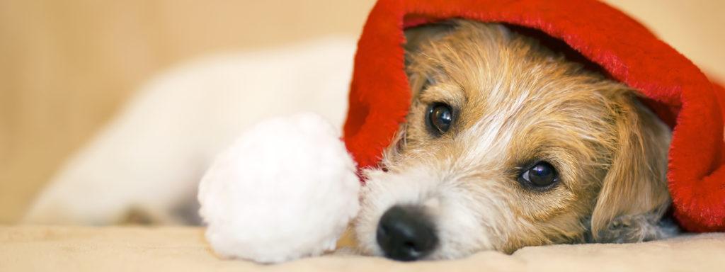 Weihnachtsurlaub im Hundezentrum Wien