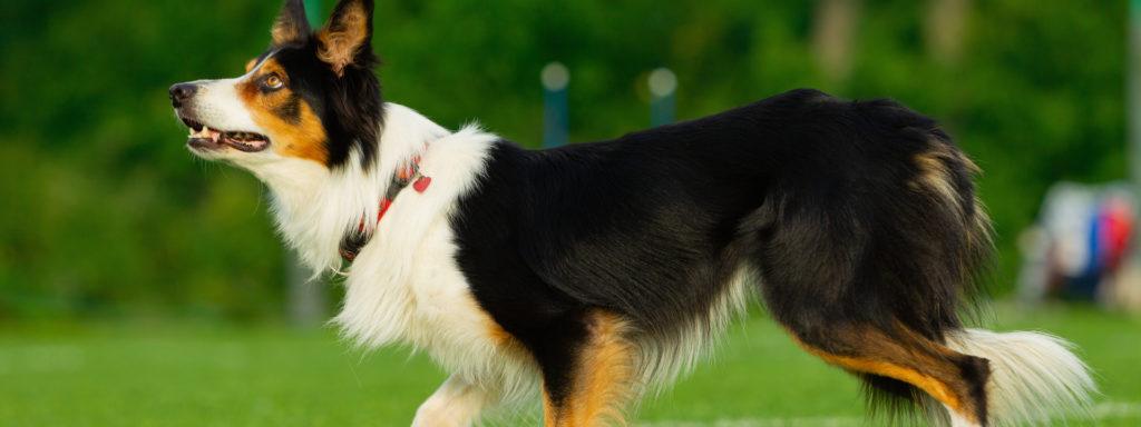Longieren mit Hund im Hundezentrum Wien