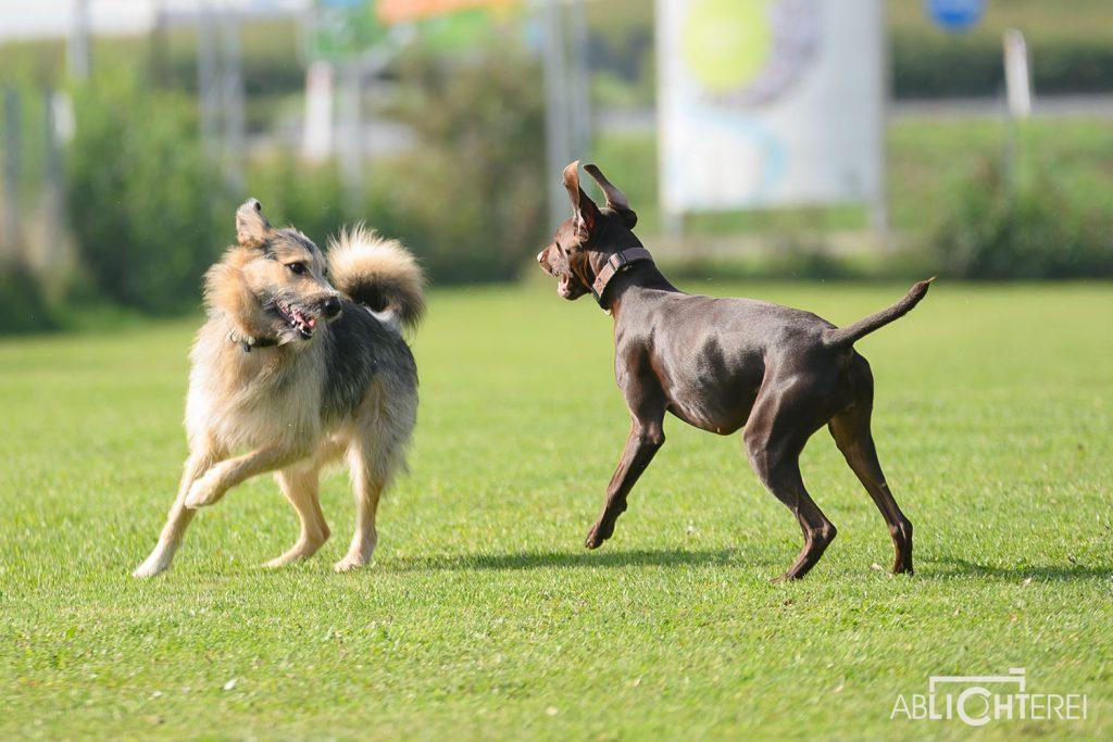In der Hundeschule 1030 Hundezentrum Wien legen wir Wert auf ein harmonisches Miteinander!