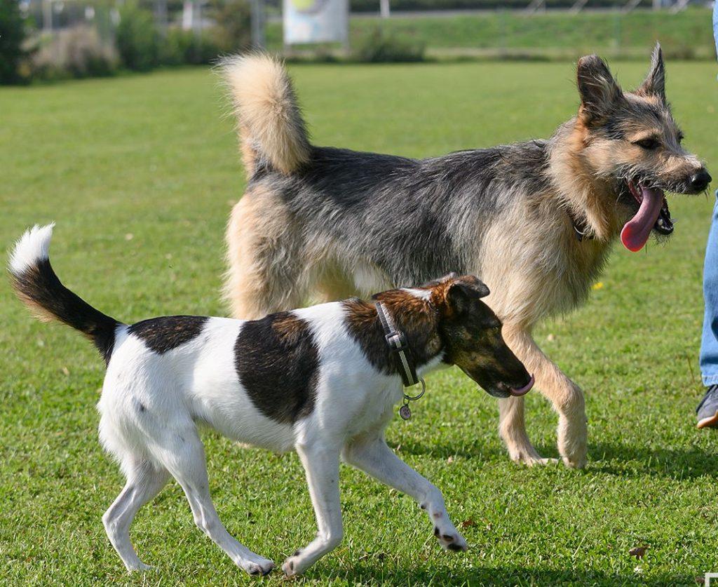 Trainingsinformationen für alle in der Hundeschule im Hundezentrum Wien