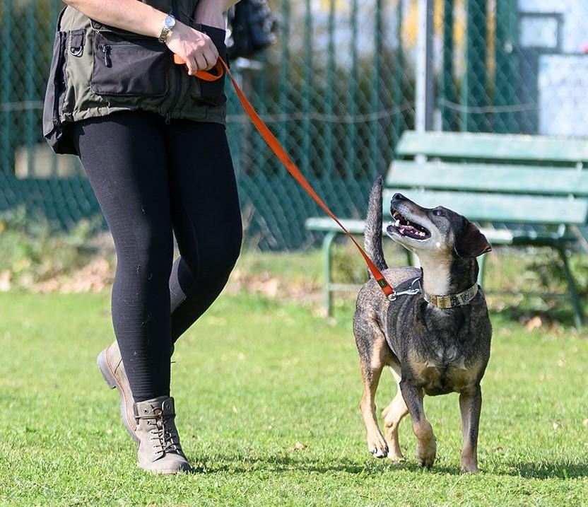 Individuelles Einzeltraining in der Hundeschule Wien