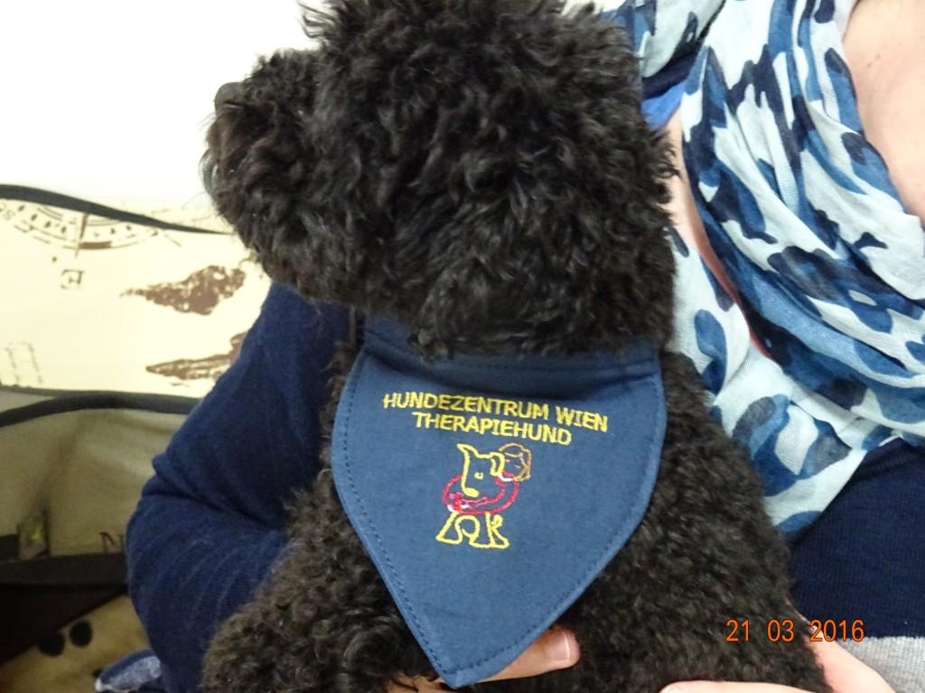 Geprüfter und zertifiziertes Therapiehund vom Hundezentrum Wien