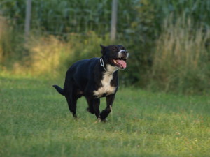 Rückruf trainieren Hund
