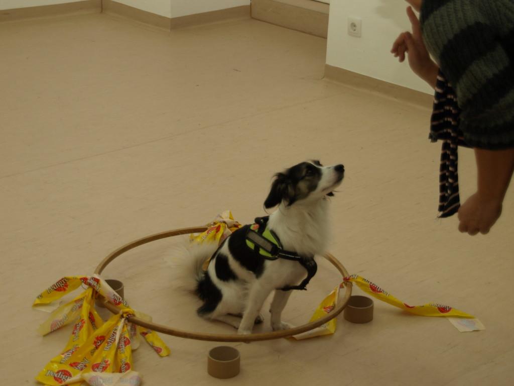 Beschäftigungskurs Train the Brain im Hundezentrum Wien