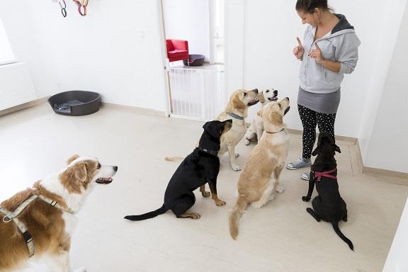 Positives Hundetraining mit Spiel in Wien