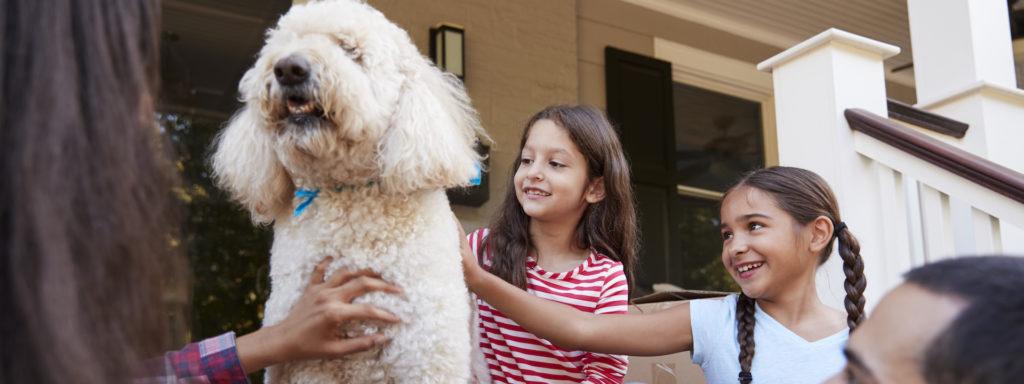 Therapiehunde Ausbildung im Hundezentrum Wien