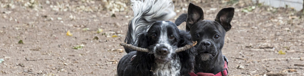Wir sind ein Team - Hundespaziergang mit Spass