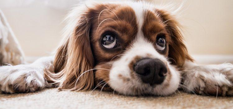 Kleinhundetraining