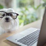 Kostenloser Info Nachmittag im Hundezentrum Wien