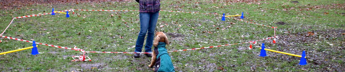Longieren im Hundezentrum Wien