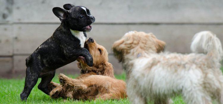 Welpentraining für angehende Therapiehunde