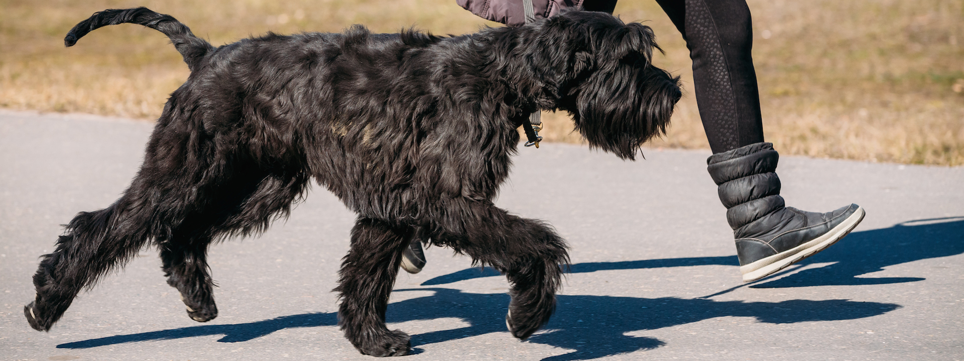 stadttraining-mit-hund-city-walk-workshop-hundezentrum-wien